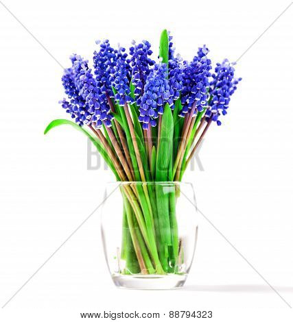 Small Blue Flowers Isolated On White. Muscari