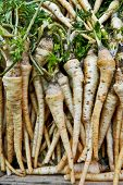 stock photo of parsnips  - Parsnip exposed on the counter of the local market - JPG