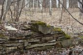 pic of house woods  - Remains of the foundations of the old house in the woods - JPG