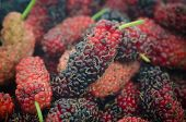 stock photo of mulberry  - Close up of organic mulberry vintage mulberry - JPG