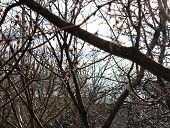 foto of spring-weather  - Spring snow cloudy weather nature disaster plant - JPG