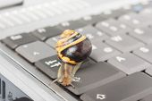stock photo of lame  - Yellow and brown snail on a gray computer keyboard