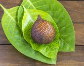 image of green snake  - Snake Fruit and Green Leaf on the Wood Table - JPG