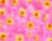 picture of zinnias  - Blurred bokeh beautifu pink zinnia flower background - JPG