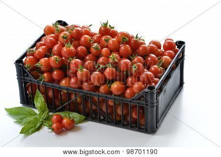 Box Of Tomatoes With Basil Leaves