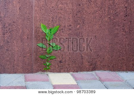 Plant On The Sidewalk