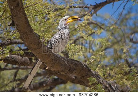 African horn bill bird on tree
