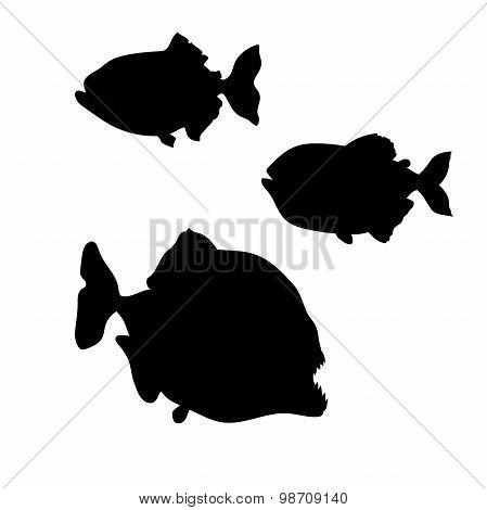 Piranha fish vector silhouettes.