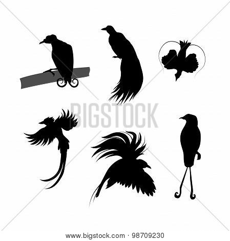 Birds of paradise vector silhouettes.