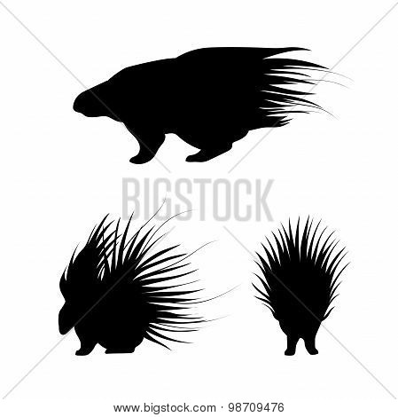 Porcupine vector silhouettes.