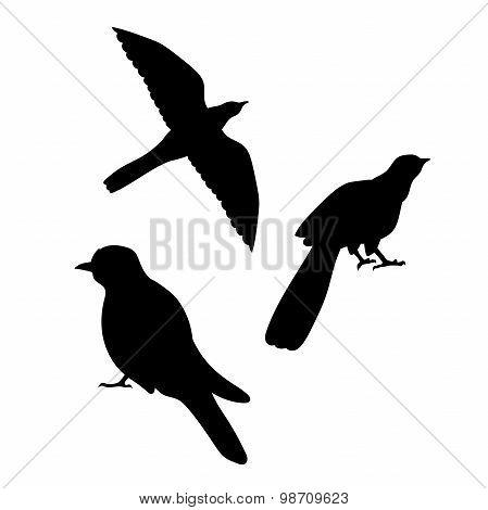 Cuckoo bird vector silhouettes.