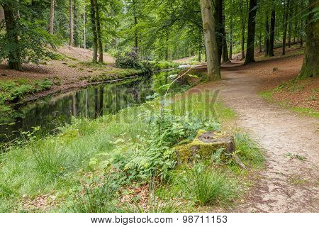 Wild Forest Path Along Water
