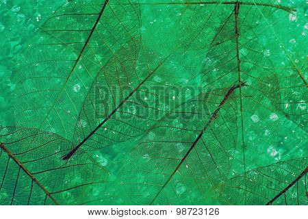 Green skeleton leaves background
