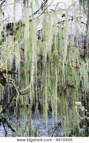 Nature's Green Silk