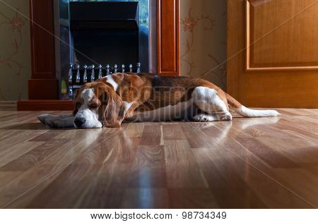 Dog Near To A Fireplace