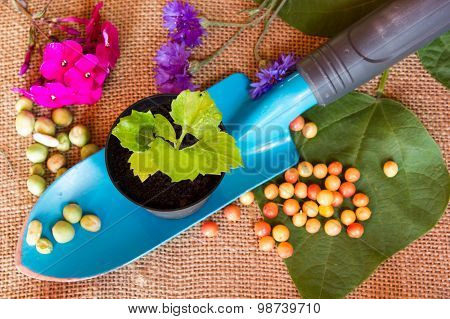 Gardening Scoop On Burlap Background With Soil, Flowerpot And Plant, Top View