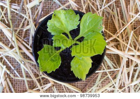Burlap Background With Soil, Flowerpot And Plant, Top View