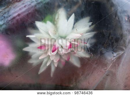 Artificial Flowers Thrown Away In Polyethylene