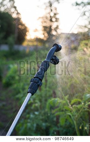 Garden Sprayer Spraying Water Over Young Tomatoes