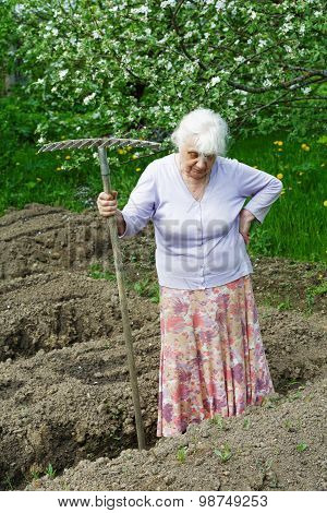 The Old Woman Works In A Blossoming Garden