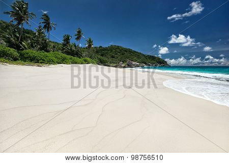 Amazing Sandy Beach With Coconut Palm Trees And Blue Sky