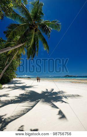 Coconut Palm Tree And Caribbean Beach