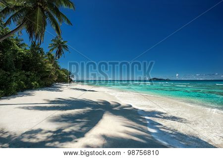 Tropical Beach With A Shadow Of The Coconut Palm Tree