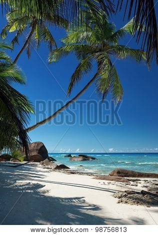 Beautiful Tropical Crystal Clear Sea With Sandy Beach And Coconut Palm Tree