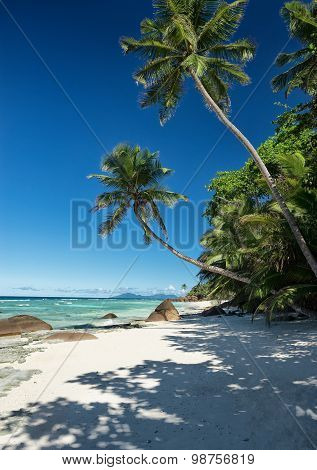 Beautiful Tropical Crystal Clear Sea With Sandy Beach And Green Vegetation