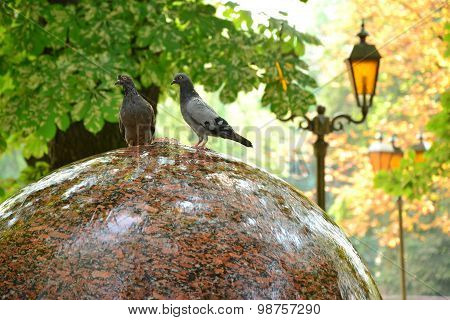 Two Funny Doves Sit On Round Fountain