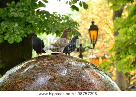 Three Funny Doves Sit On Round Fountain