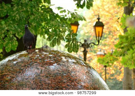 Funny Dove Walks On Round Fountain