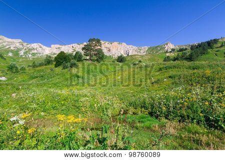 Beautiful Fields Of Flowers