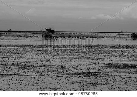 Landscape Of Mudflat