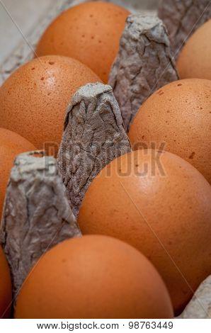 Fresh chicken eggs in carton