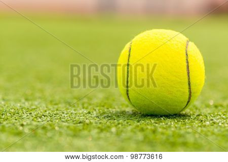 Ball For Playing Tennis Is On The Green Grass Macro Shot