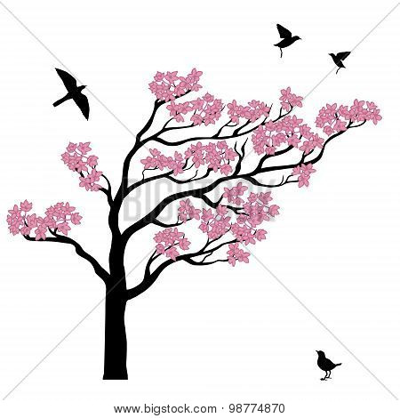 Silhoutte of sakura tree with birds