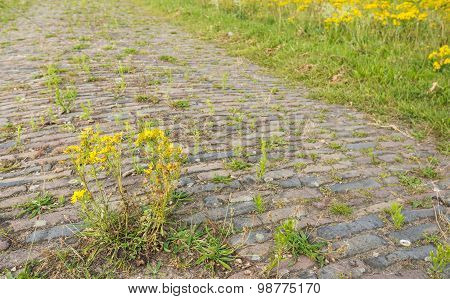 Closeup Of An Old Paved Road Overgrown With Weeds