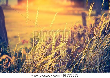 Vintage Photo Of Beautiful Landscape With Morning Meadow