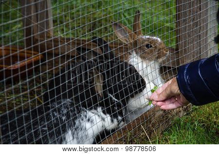 Rabbits In A Hutch