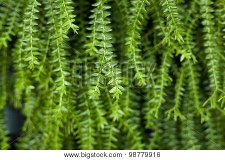 Closeup Image Of Leaf Of Tropical Fern