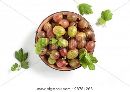 The organic gooseberries