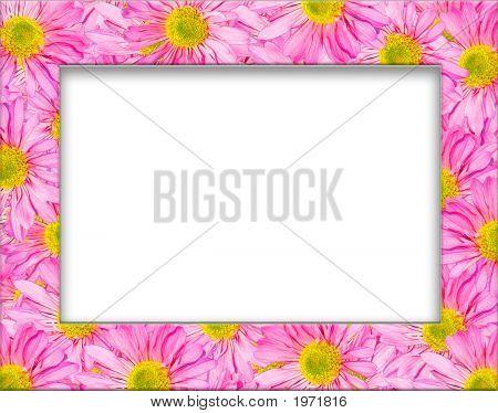 Pink Gerbera Daisy Frame
