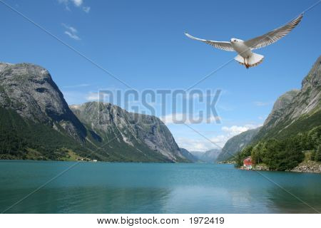 Flying Seagull And Norwegian Fjords