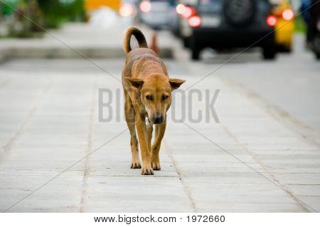 Dog On Street