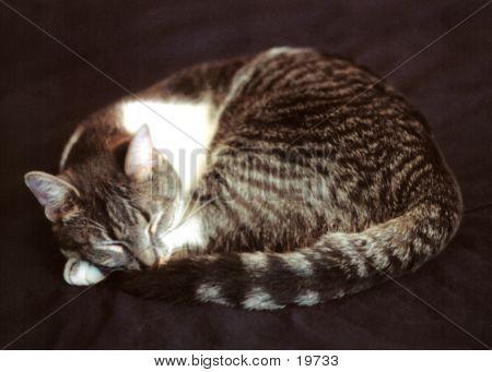 Cailin Sleeping