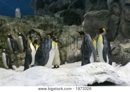 Group Meetin Of Penguin