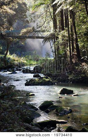 Whangarei Forest