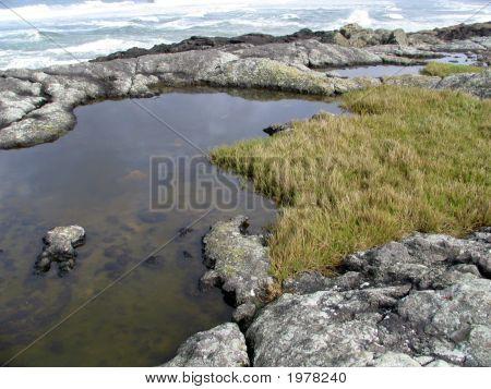 Oregon Tidal Pools