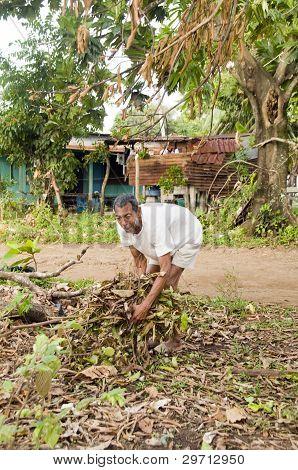Native Nicaraguan Man Gathering Brush For Fire Corn Island Nicaragua